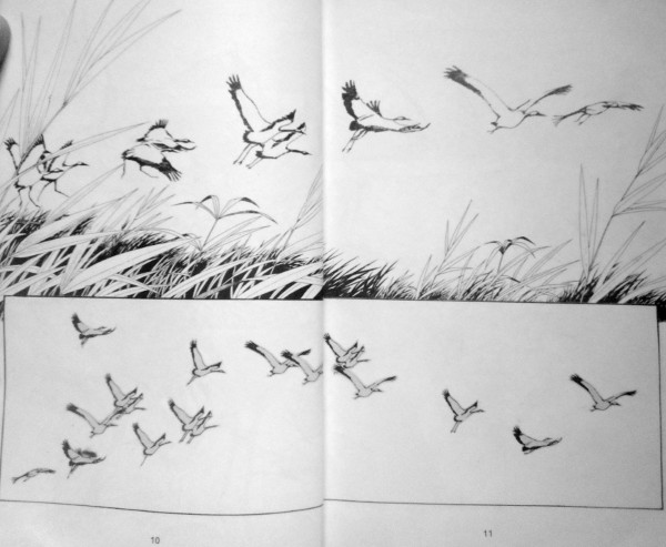 The water birds in flight.