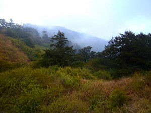 Conifers and high-mountain grasses are cloaked in lots of fog.